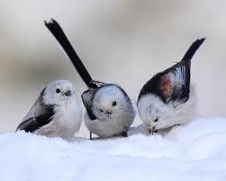birdsinsnow