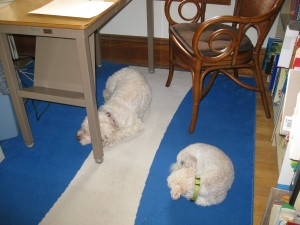 My writing companions, Muffin and Sophie, asleep on the job.