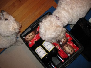 The dogs explore my multitasking recovery kit.
